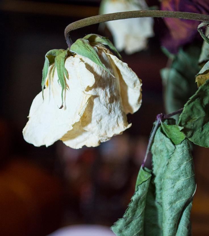 Flower_036