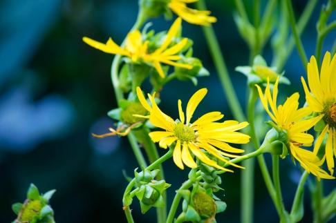 Flowers_028