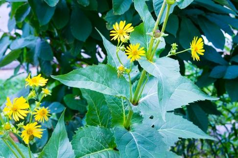 Flowers_029