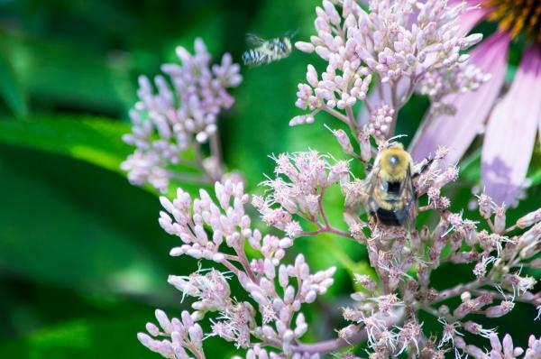 Flowers_047
